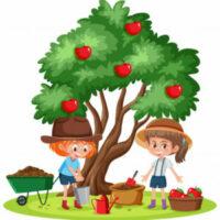 Podpořte hlasováním náš projekt výsadby stromů